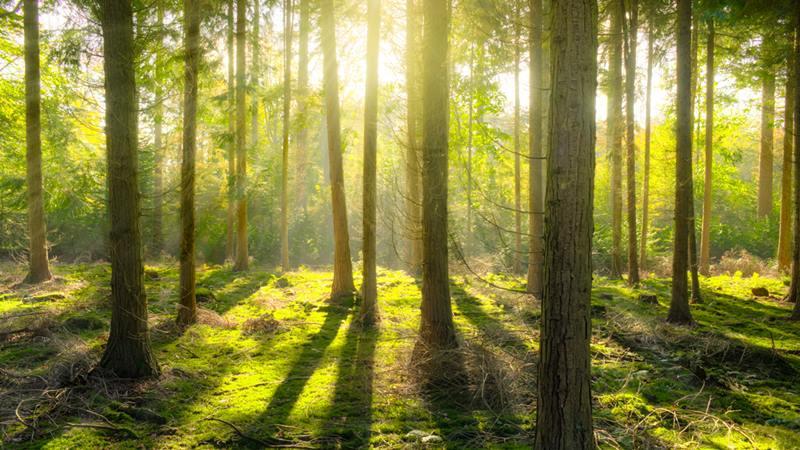 Suasana hutan yang terang sebagai ilustrasi Sustainable Investing.