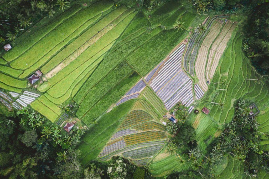 FAO Apresiasi Prestasi Pertanian Indonesia