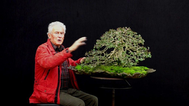 bonsai maple jepang