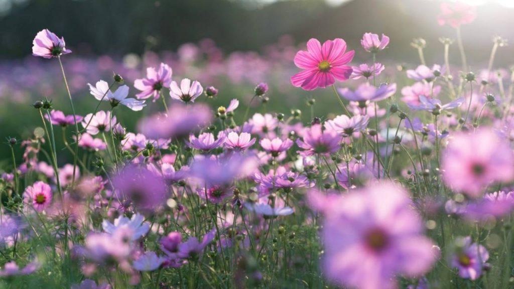 Macam-Macam Bunga